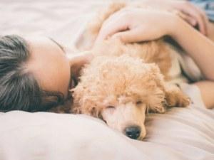 Какво означава позата, в която домашният ви любимец заспива