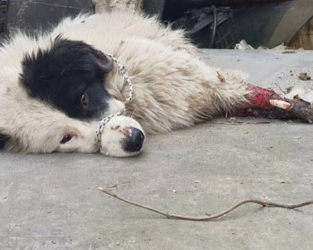 Мъж уби кучето си с кол в Пловдивско, душило кокошките!