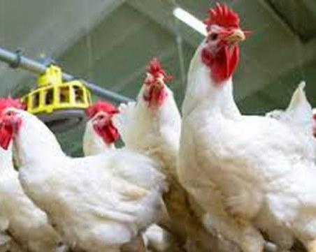 Огнища с птичи грип откриха в две пловдивски села