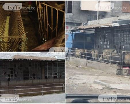 След сигнал на TrafficNews: Премахнаха част от незаконната кошара за овце в