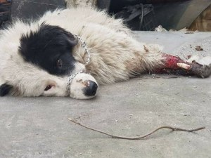 Мъж уби кучето си кол в Пловдивско, душило кокошките!