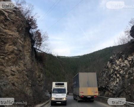 Обезопасяват района около дървото, надвиснало на пътя Пловдив-Пампорово