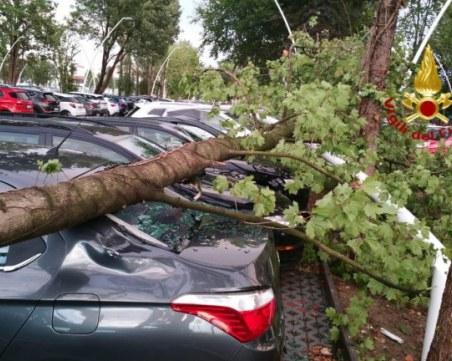 Паднало дърво помля три коли в Асеновград