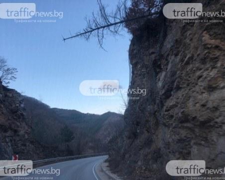 След публикация на TrafficNews.bg: Премахнаха опасното дърво на пътя Пловдив – Смолян