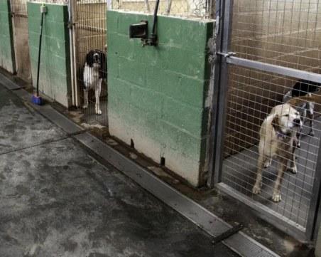 Жестоко! Ветеринар умъртви куче в общински приют с амониева селитра