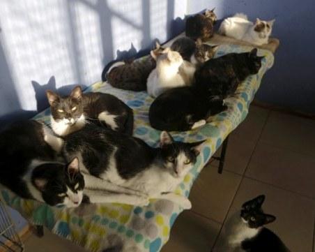 Жена отглежда десетки котки и кучета в апартамент, институциите - безсилни