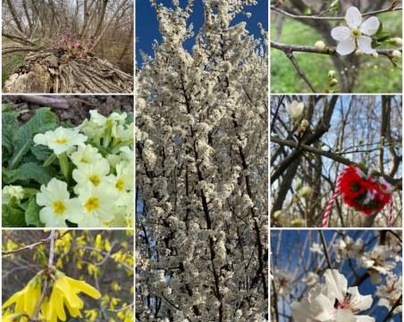 Усещане за пролет в Пловдив! Насладете му се!