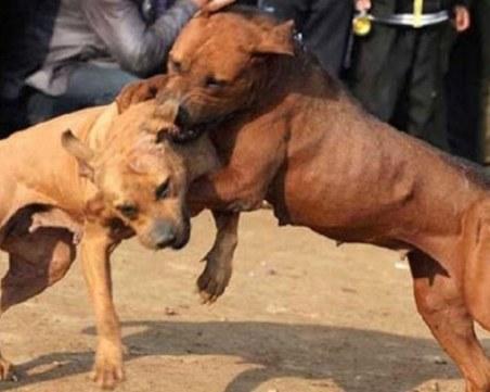 Арестуваха 26-годишен за организирани боеве с кучета