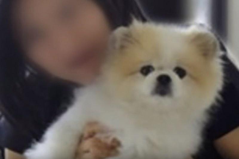 Почина първото куче с коронавирус в света