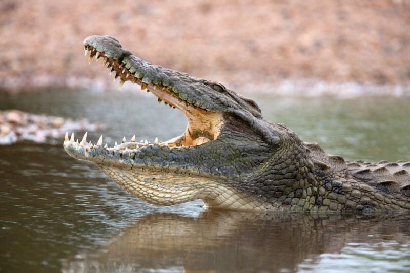 Мъж в Руанда избяга от карантината и го изяде крокодил