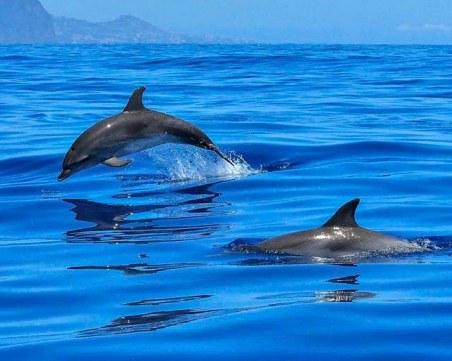 Делфините се завръщат в пристанището на Триест, патици се къпят във фонтаните на безлюден Рим