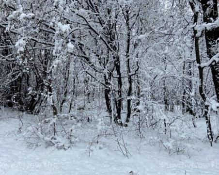 Над 15 см сняг покри селата в Родопската яка