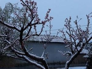 Първоаприлски сняг вали в Пловдивско