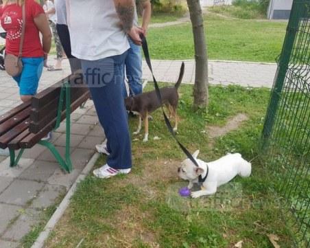 Пловдивчани ще могат да си платят таксата за кучета онлайн