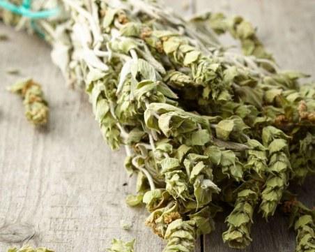 Мурсалски чай – още един начин да засилите имунната си система