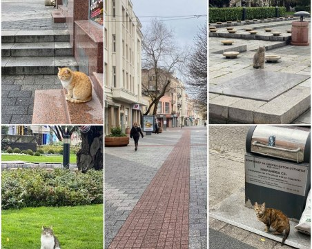 На Главната останаха само ... котките