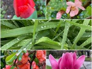 Пролетна еуфория от цветя и дъждовни капки