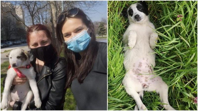 Осиновиха две, от общо трите кученца, захвърлени в покрайнините на Пловдив