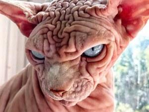 Най-плашещата котка, която сте виждали