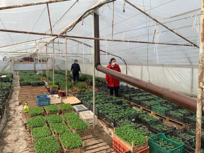 Десислава Танева: Скоро ще отворят всички земеделски пазари