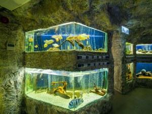 Природонаучният музей на Пловдив кани на 3D разходки