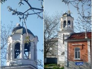 Първите щъркели долетяха в Пловдив