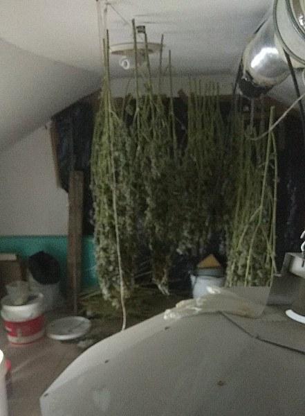 Разбиха домашна оранжерия за канабис, мъж е арестуван