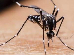 Преносители ли са комарите на коронавирус?