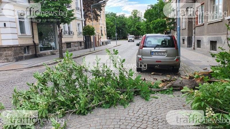 Огромен клон се стовари в центъра на Пловдив