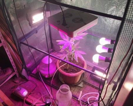 Митничари се превърнаха в земеделци - отглеждали марихуана