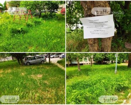 Престъпно нехайство! Пловдивски квартал с треви до колене, в тях пълно с кърлежи