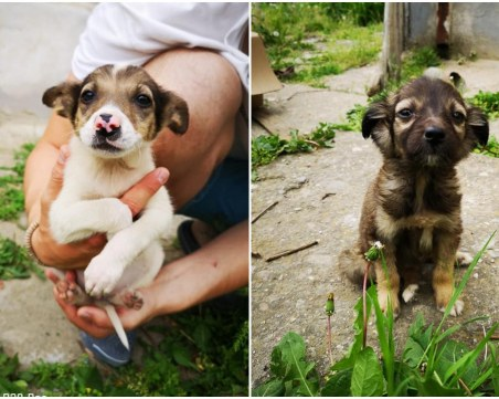 Пловдивчани намериха захвърлени в кофа кученца, едното търси своя стопанин