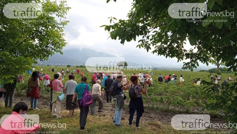 Доброволци помагат безвъзмездно на розобера край Карлово