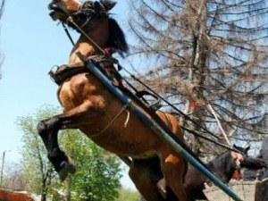 Мъж загина при нелеп инцидент с кон