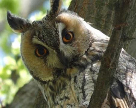 РИОСВ Пловдив спаси две защитени птици за ден