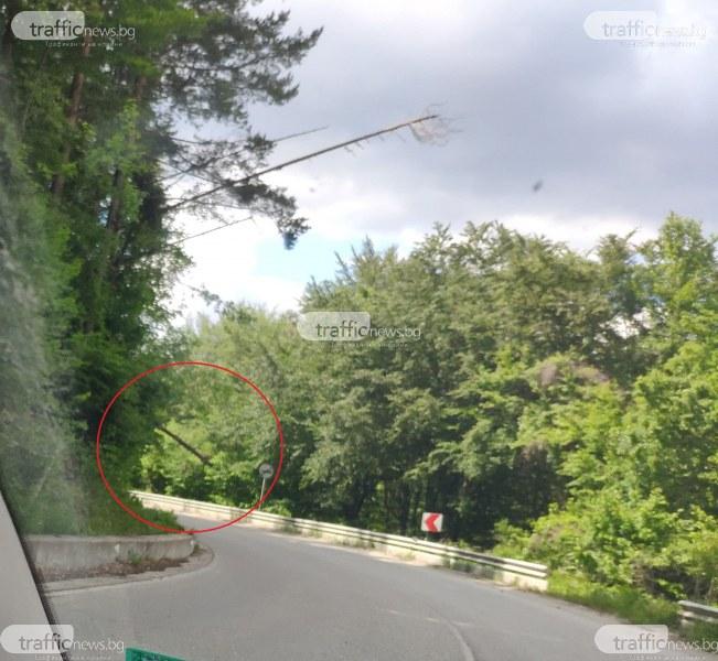 На косъм от тежък инцидент: Тир едва не се заби в паднало дърво на пътя за Пампорово