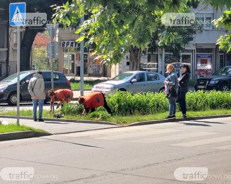 Трудоваците в пловдивските ОП-та: Двама работят, трима контролират