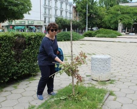 Вандали унищожиха градина в Пловдив, символ на мирното съжителство
