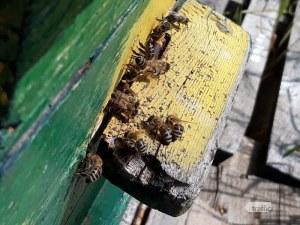 Отпускат над 6 млн. лв. на пчеларите