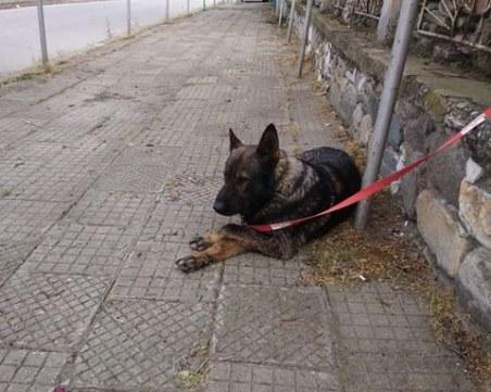 Зак изчезна край Пловдив! Стопаните му го търсят от седмица