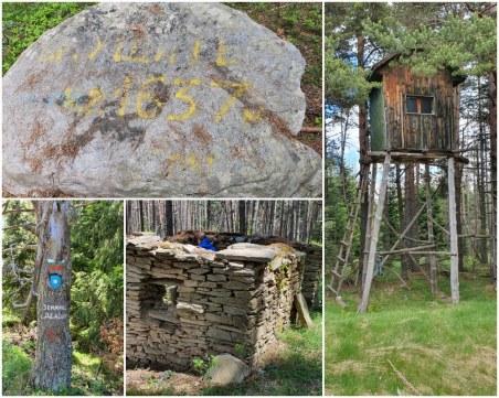 В дебрите на Родопите: До връх Ушите, през панорамната скала и боровинките
