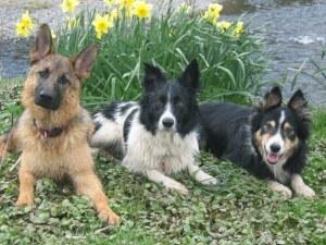 ВМЗ забрани на служителите си да хранят кучета, пращат животните в приют
