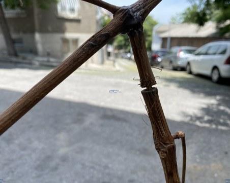 Куриозна кражба на ток разкриха в Карлово ВИДЕО
