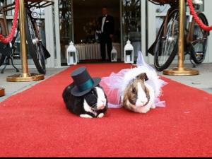 Зайци се венчаха в хотел