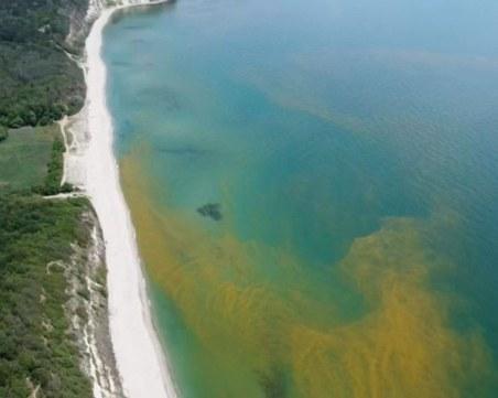 Водата в един най-красивите плажове в България пожълтя