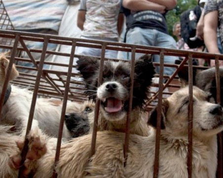 Напук на пандемията: Фестивал на кучешкото месо организират в Китай