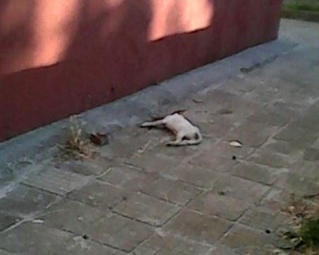 Зверство! 10-годишна уби кученце по особено жесток начин