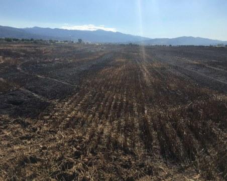Пожар по време на жътва изпепели 500 декара
