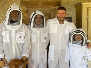 Дейвид Бекъм стана пчелар