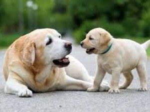 На колко години е кучето ви? Изчислявали сме грешно старостта и младостта на четириногите